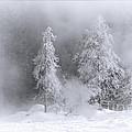 Winter Wonderland Of Yellowstone by Priscilla Burgers