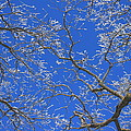 Winter Wonderland by Penny Meyers