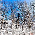 Winter Wonderland by Frozen in Time Fine Art Photography