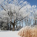 Winter Wonderland by Robyn Saunders