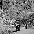 Winter Wonderland by Sebastian Musial