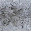 Winter Wonderland Series #01 by Ausra Huntington nee Paulauskaite
