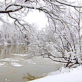 Winter Wonderland by Tracy Winter