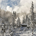 Winter Wonderland - Yellowstone National Park by Sandra Bronstein