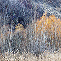 Winter Woodland  by Elena Elisseeva
