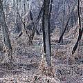 Winter Woods In Missouri 1 by Greg Matchick
