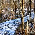 Winter Woods Walk by Ann Horn