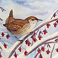 Winter Wren by Janet Zeh