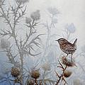 Winter Wren by Mike Stinnett