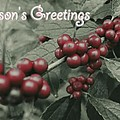 Winterberry Greetings by Photographic Arts And Design Studio