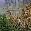 Winterberry In Fog by Fran Gallogly