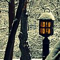 Wintered Lantern by Cyryn Fyrcyd