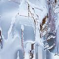 Winterland by Kume Bryant