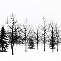 Winter's Bareness II by Lori Dobbs