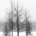 Winter's Bareness  by Lori Dobbs