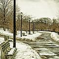 Winters Beauty by Valeriy Shvetsov