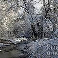 Winter's Canvas by Cheryl Aguiar