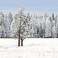 Winter's Coat by Dee Cresswell