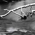 Winters Creek by Steven Matalenas