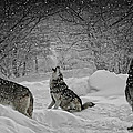 Winters Eve Howling by Wes and Dotty Weber