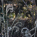 Winters Flourishes  by Suzanne Gaff