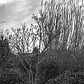 Winters Garden by Cathy Anderson