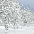 Winter's Glory - Grand Tetons by Sandra Bronstein