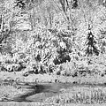 Winter's Grip by Jo-Anne Gazo-McKim