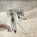 Winters Kill by Steve McKinzie