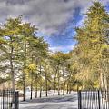 Winters Light by Dean Wittle