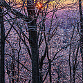 Winter's Light by Michael Sims