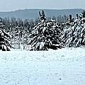Winter's Love  by Robert Nacke