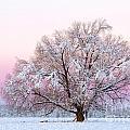 Winter's Majesty Morning by Lori Dobbs