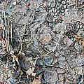 Winter's Mud by Allen Carroll