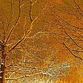 Winters Touch 2 by Nicki Bennett