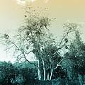 Winter's Tree by Kathleen Grace