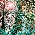 Wintersun by Russ Brown