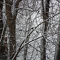 Wintery Day by Jacki Smoldon