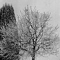 Wintery Tree by Mike Wheeler