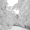 Wintry Road by Conny Sjostrom