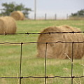 Wire And Hay by Jewels Blake Hamrick