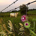 Wisconsin Evening by Viviana  Nadowski