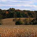 Wisconsin Fields In Late Summer by Kay Novy