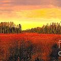 Wisconsin Winter by Robert Kleppin