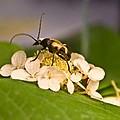 Wise Beetle by Douglas Barnett