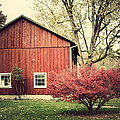 Wise Old Barn Summertime by Joshua Zaring