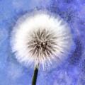 Wish A Little Wish by Krissy Katsimbras