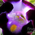 Wishbone Flower by Kristine Merc