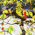 Wishing Tree At The Tomb Of Emperor by Panoramic Images