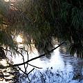 Wishkah River by Angela Edwards